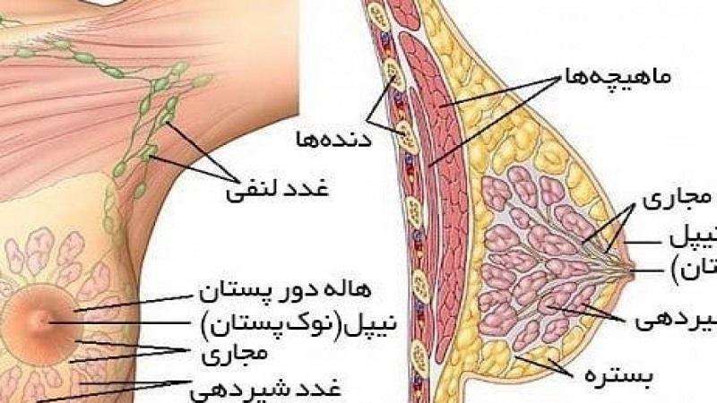 نکات مقابله و پشتیبانی سرطان پستان   جراح پستان اصفهان